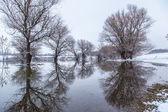 D'inverno il paesaggio fiume zagyva in ungheria — Foto Stock