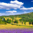 Lavender field in the summer — Stock Photo