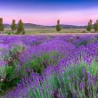Sunset over summer lavender field in Tihany, Hungary — Zdjęcie stockowe #21252633