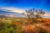 Drzewo w pobliżu wydmy pustyni, Hiszpania, Andaluzja, almeria — Zdjęcie stockowe