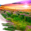 Artist brush painting picture of beautiful landscape — Stock Photo
