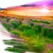 Stock Photo: Artist brush painting picture of beautiful landscape