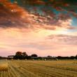 Stock Photo: End of day over field with hay bale in Hungary