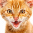 Red little cat — Stockfoto