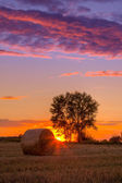 Sunset field, tree and hay bale — Stock Photo