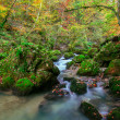 Creek deep in mountain forest  in Transylvania — Stock Photo