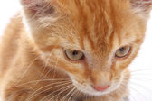 Red little cat — Stock Photo