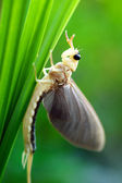 Mayfly between the grass — Stock Photo