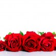 Red roses over white — Stock Photo