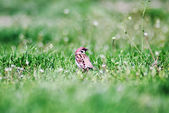 Bird standing in the grass — Stock Photo