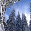 Winter Vitosha — Stock Photo #39505493