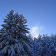 Winter Vitosha — Stock Photo #39505717