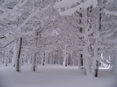 Snowy forest — Stockfoto