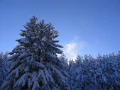Winter Vitosha — Stock Photo