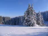 Winter Vitosha — Stockfoto