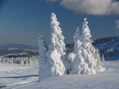 Snowbound trees — Stockfoto