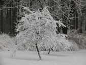 Snowy trees — Stockfoto