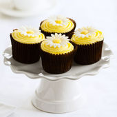 Daisy cupcakes — Stock Photo