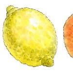 Watercolor painting of a set of fruit: mandarin, lemon and orang — Stock Photo