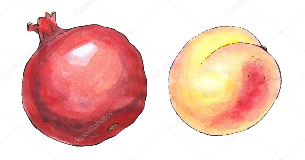 Watercolor painting of a set of fruit pomegranate and for Peach auto painting