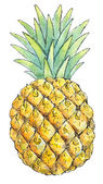 Watercolor painting of a set of fruit: pineapple — Stockfoto