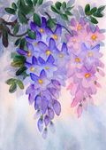Watercolor painting. Lush clusters of wisteria — Stock Photo