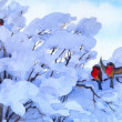 Watercolor winter scene. Bullfinch sitting on a snow-covered branches — Stock Photo