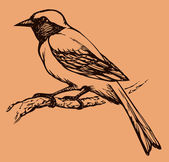 """Vector drawing of a series of sketches """"Birds"""". Redstart — Stock Vector"""