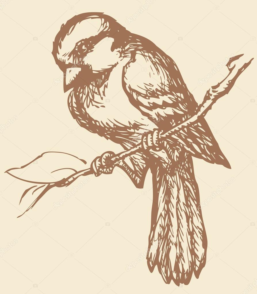 Drawing Birds John Busby 8601416697772 Amazoncom Books
