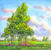 Watercolor landscape. Trees in the evening field — Stock Photo