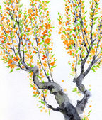 Watercolor spring background. Orange flowers on tree branches — Stock Photo