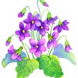 Watercolor painting. Delicate flowers bush forest violet — Stock Photo #40369527