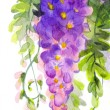 Watercolor painting. Violet wisteria — Stock Photo #40769315