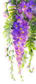 Watercolor painting. Violet wisteria — Stock Photo