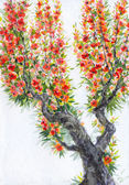 Watercolor background. Spring blooming of an old tree — Stock Photo