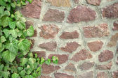 Green ivy twigs curls on stone wall — Stock Photo