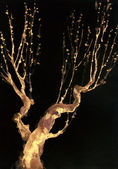 Graphic backdrop. Bare branches of an old tree — Stockfoto