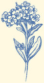 Vector drawing. Sprig of Forget-me-not — 图库矢量图片