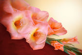 Gladiolus branch with pink flowers and buds — Stock Photo