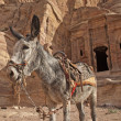 Donkey in Petra — Stock Photo #22417331