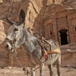 Stock Photo: Donkey in Petra