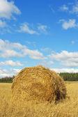 Botte de foin dans un champ — Photo