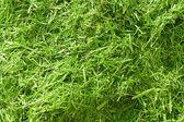Slanted grass — Stock Photo