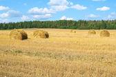 Feld mit heuschober — Stockfoto