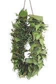Dry bay leaf — Stock Photo