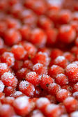 Redcurrant — Photo