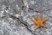 Rozgwiazda na kamień — Zdjęcie stockowe