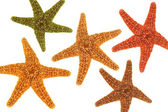 Five starfish  — Stock Photo