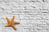 Starfish and brick wall  — Stock Photo
