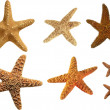Starfish — Stock Photo #41790729